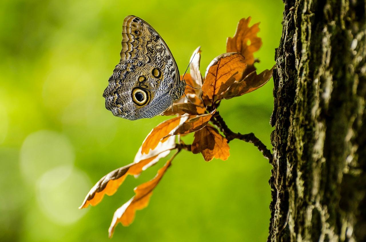 changer de nom de projet papillon